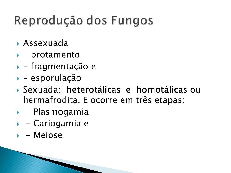 Assexuada - brotamento - fragmentação e - esporulação Sexuada: heterotálicas e homotálicas ou hermafrodita. E ocorre em três etapas: - Plasmogamia - C