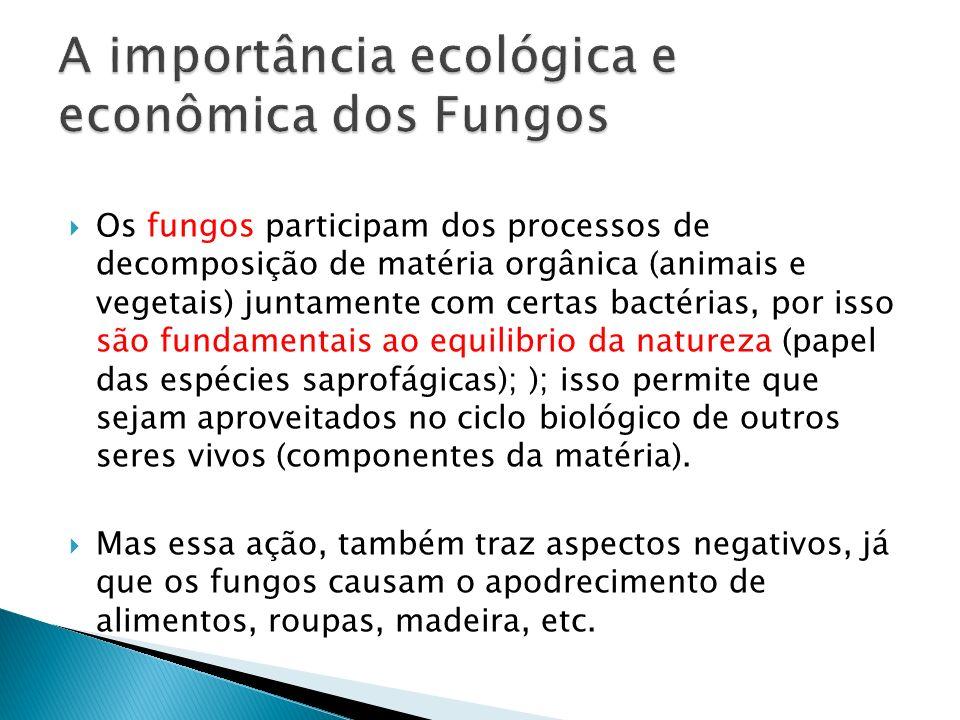 Os fungos participam dos processos de decomposição de matéria orgânica (animais e vegetais) juntamente com certas bactérias, por isso são fundamentais
