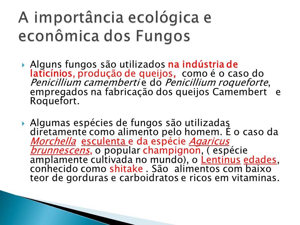Alguns fungos são utilizados na indústria de laticínios, produção de queijos, como é o caso do Penicillium camemberti e do Penicillium roqueforte, emp