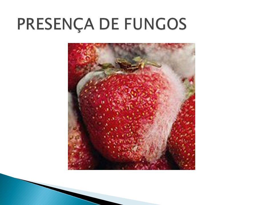 Todos os fungos multicelulares são constituídos por filamentos microscópicos ramificados, chamados hifas.
