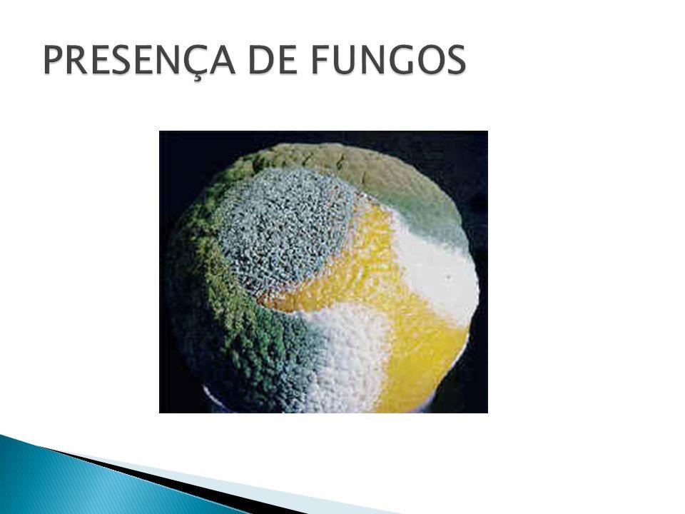 Alguns fungos são utilizados na indústria de laticínios, produção de queijos, como é o caso do Penicillium camemberti e do Penicillium roqueforte, empregados na fabricação dos queijos Camembert e Roquefort.