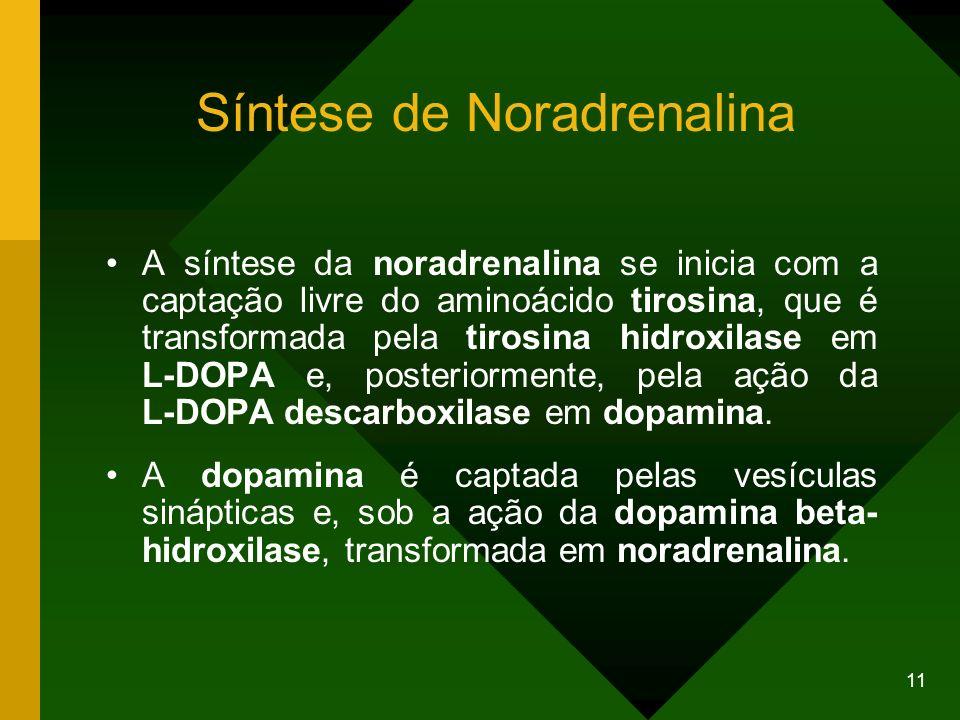11 Síntese de Noradrenalina A síntese da noradrenalina se inicia com a captação livre do aminoácido tirosina, que é transformada pela tirosina hidroxi