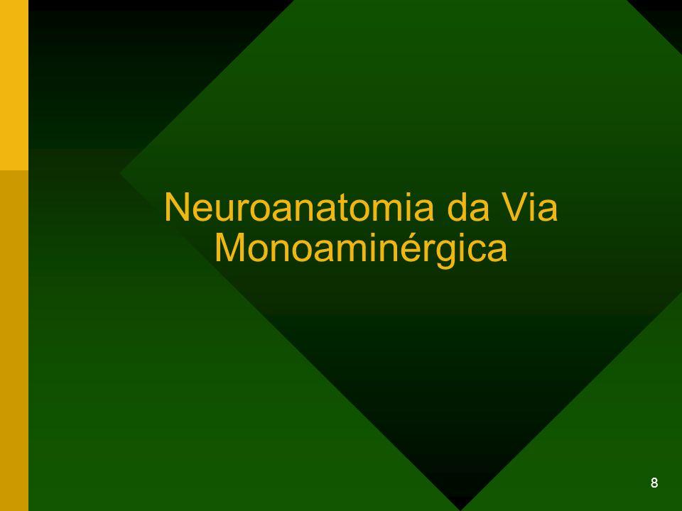 9 Vias serotoninérgicas centrais As projeções dos neurônios serotoninérgicos se dirigem para quase todas as estruturas do prosencéfalo.