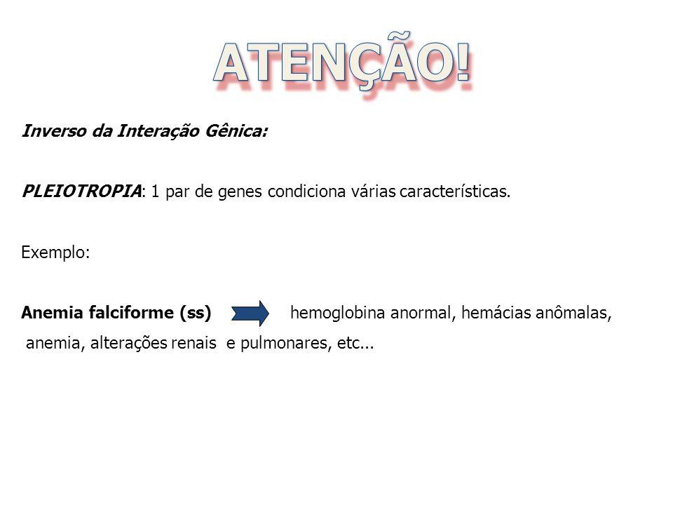 Genes aditivos ou poligenes.