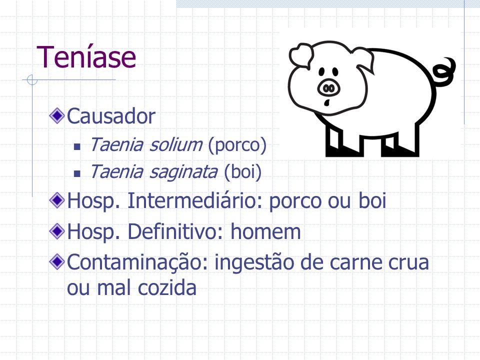 Teníase Causador Taenia solium (porco) Taenia saginata (boi) Hosp. Intermediário: porco ou boi Hosp. Definitivo: homem Contaminação: ingestão de carne