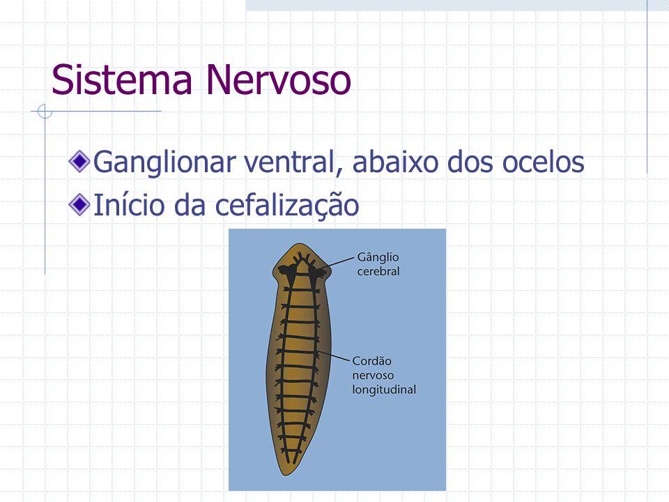 Sistema Nervoso Ganglionar ventral, abaixo dos ocelos Início da cefalização