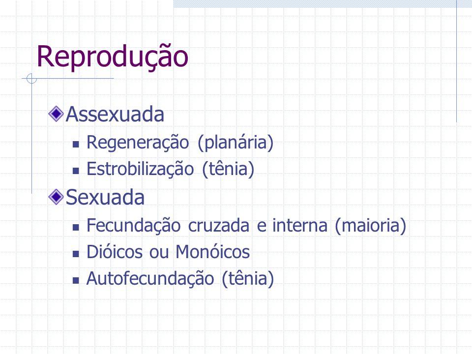 Reprodução Assexuada Regeneração (planária) Estrobilização (tênia) Sexuada Fecundação cruzada e interna (maioria) Dióicos ou Monóicos Autofecundação (