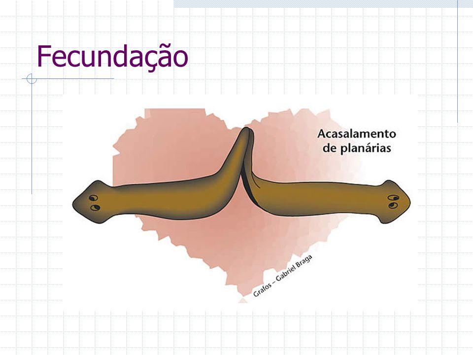 Classificação Turbelários Todos os representantes de vida livre (dulcícolas ou terrestres).