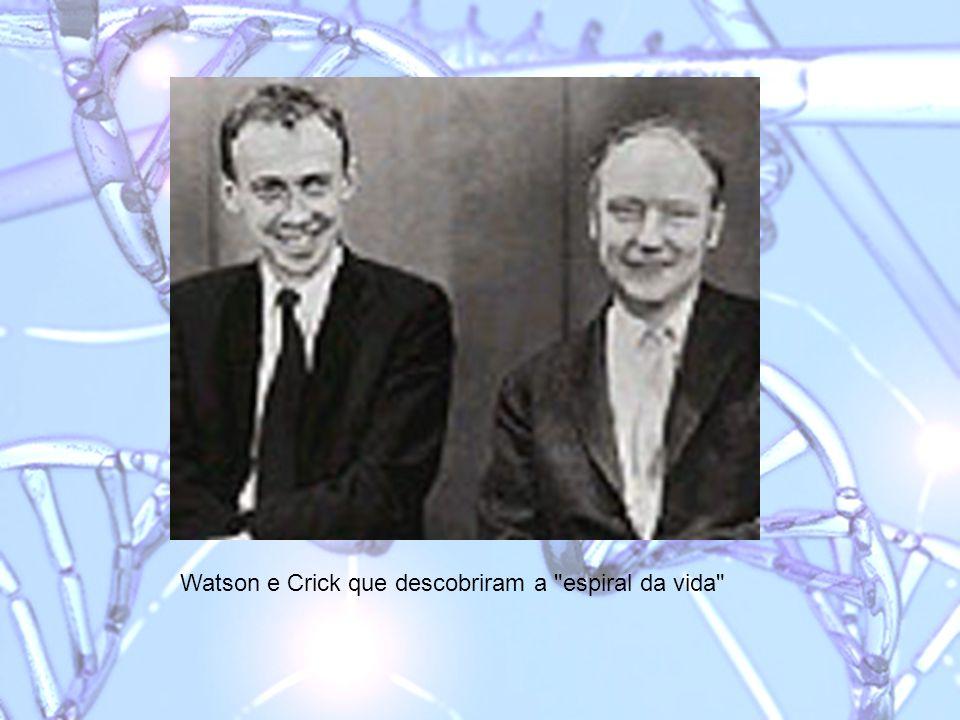 Watson e Crick que descobriram a