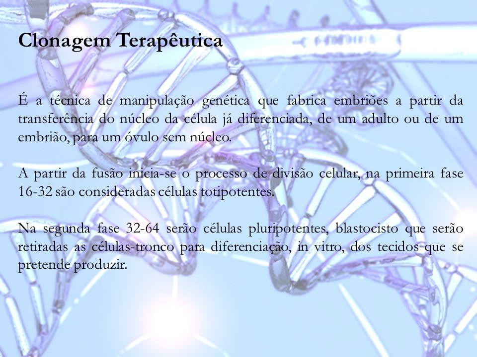 Clonagem Terapêutica É a técnica de manipulação genética que fabrica embriões a partir da transferência do núcleo da célula já diferenciada, de um adu