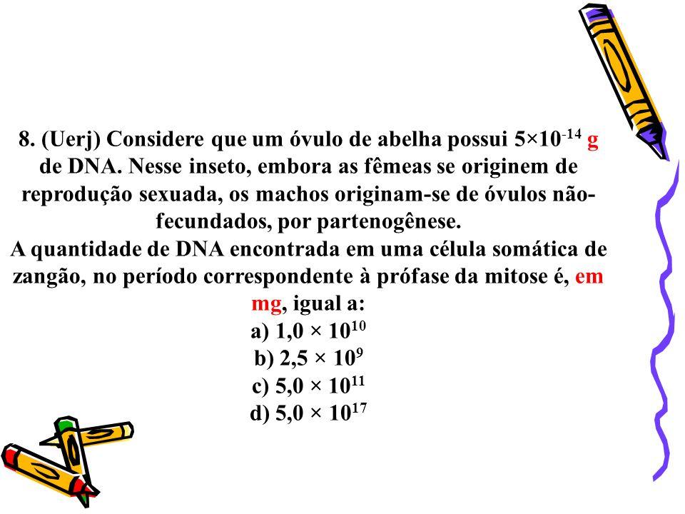 8. (Uerj) Considere que um óvulo de abelha possui 5×10 -14 g de DNA. Nesse inseto, embora as fêmeas se originem de reprodução sexuada, os machos origi