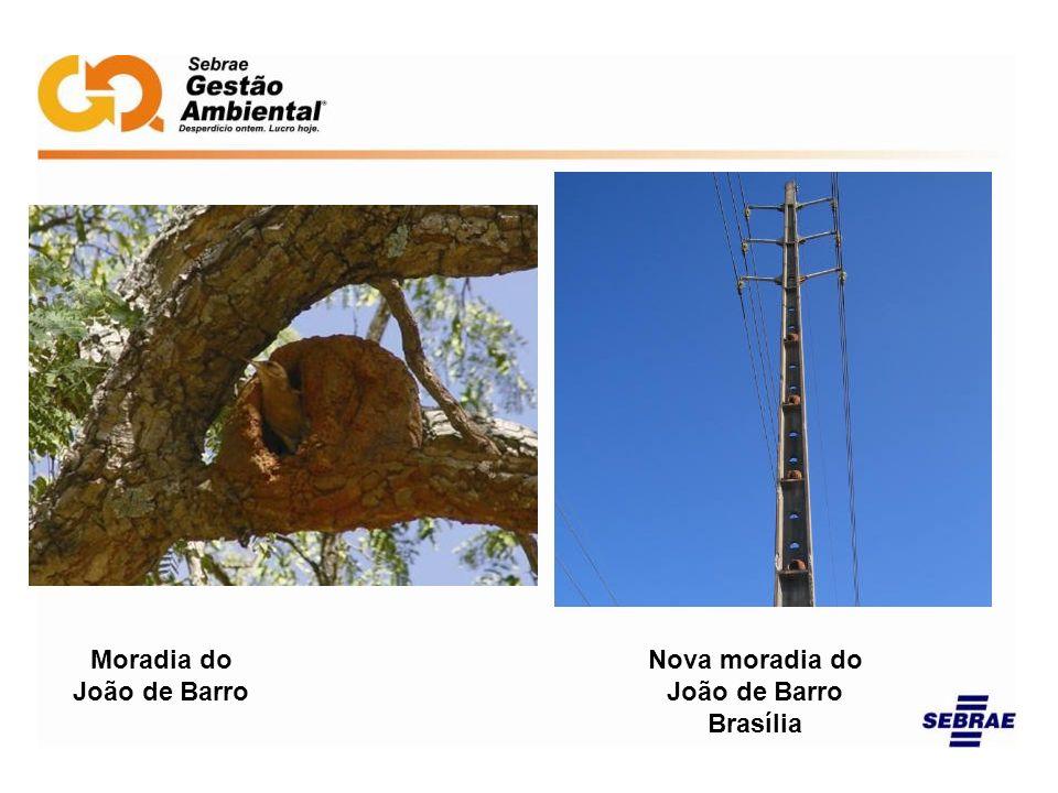 Nova moradia do João de Barro Brasília Moradia do João de Barro