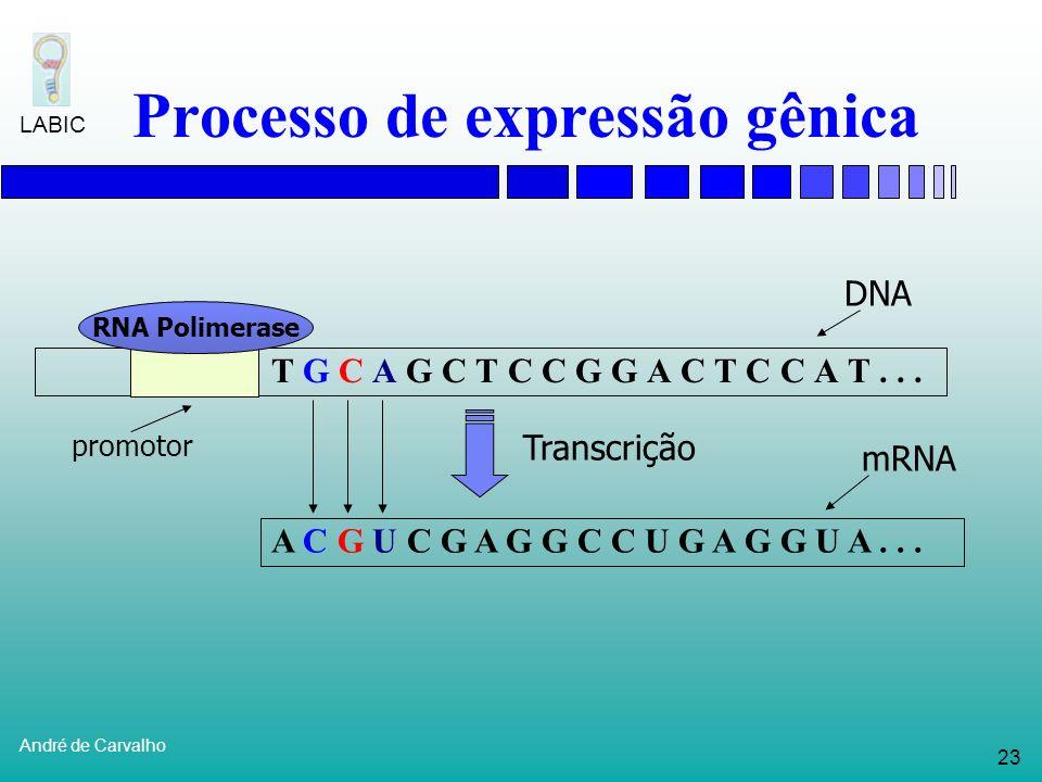 22 André de Carvalho LABIC Processo de expressão gênica G C A G C T C C G G A C T C C A T... RNA Polimerase promotor Transcrição DNA mRNA A T