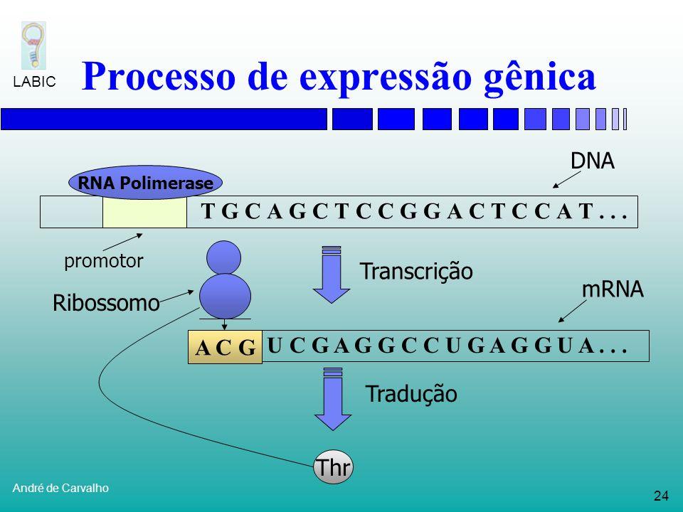 23 André de Carvalho LABIC Processo de expressão gênica T G C A G C T C C G G A C T C C A T... RNA Polimerase promotor Transcrição A C G U C G A G G C