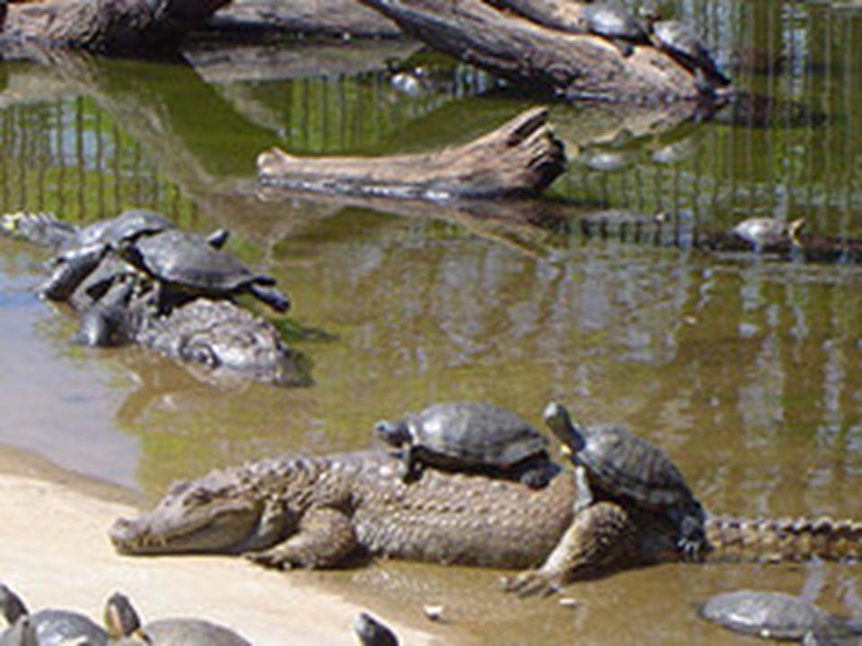 O Jardim Zoológico de Brasília ocupa área de 140 hectares, Tem na topografia um leve declive, característica do bioma Cerrado, onde são distribuídos v