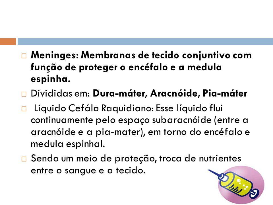 Meninges: Membranas de tecido conjuntivo com função de proteger o encéfalo e a medula espinha. Divididas em: Dura-máter, Aracnóide, Pia-máter Liquido