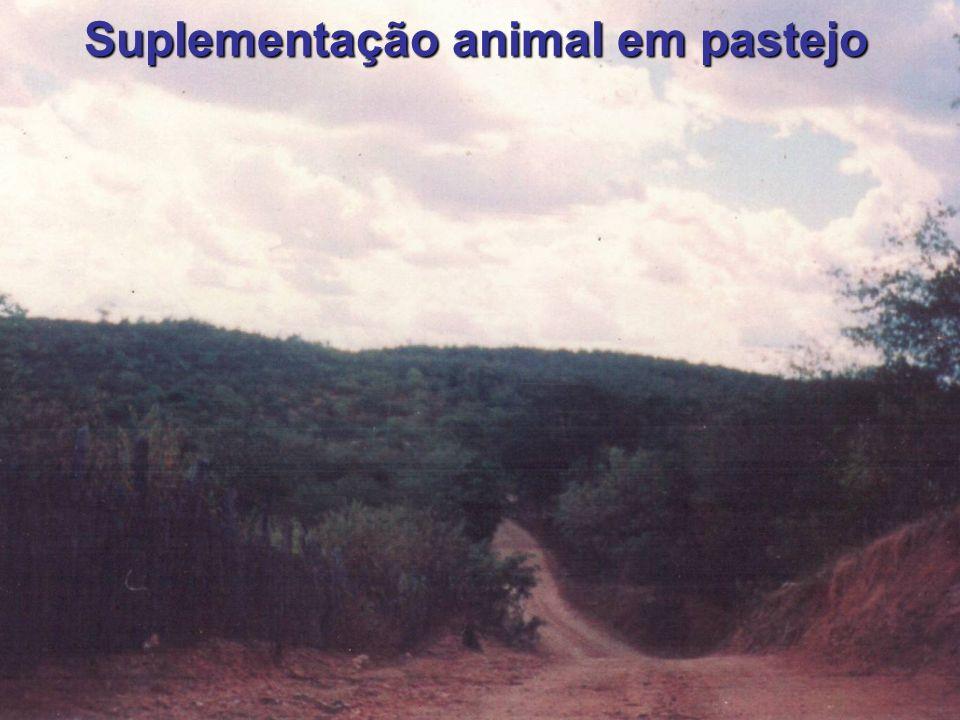 2 Suplementação animal em pastejo
