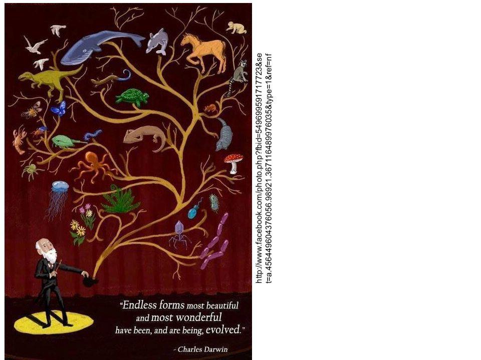 Também conhecida como teoria sintética da evolução Darwin não conhecia as causas da variabilidade Anos depois...
