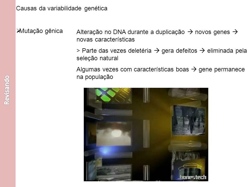 Causas da variabilidade genética Mutação gênica Alteração no DNA durante a duplicação novos genes novas características > Parte das vezes deletéria ge