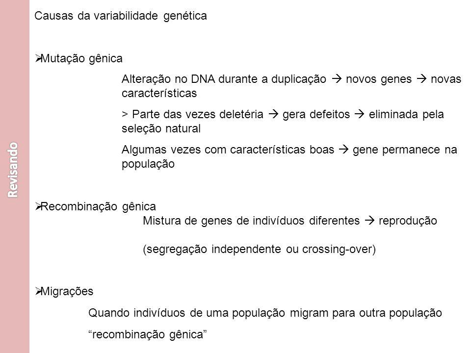 Causas da variabilidade genética Mutação gênica Recombinação gênica Migrações Alteração no DNA durante a duplicação novos genes novas características