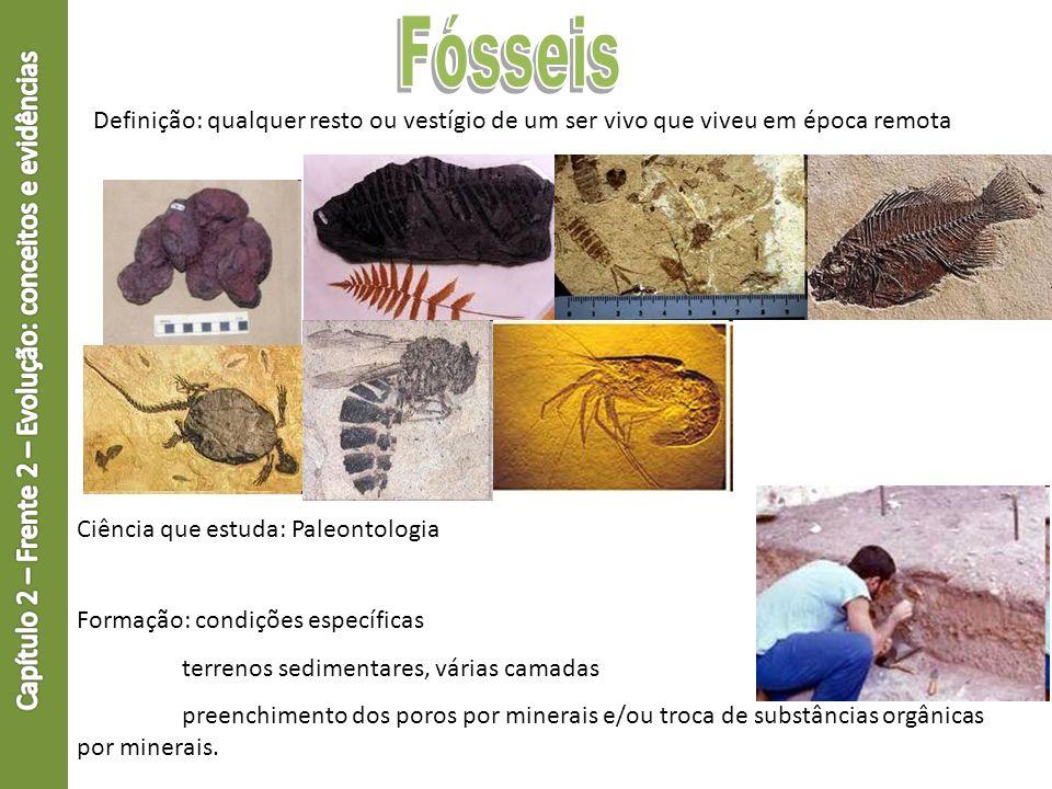 Definição: qualquer resto ou vestígio de um ser vivo que viveu em época remota Ciência que estuda: Paleontologia Formação: condições específicas terre