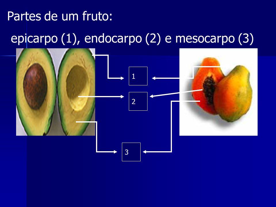 FRUTO: órgão encontrado somente nas angiospermas, com a finalidade protetora, mas acima de tudo, de dispersão das sementes. Portanto, suas característ