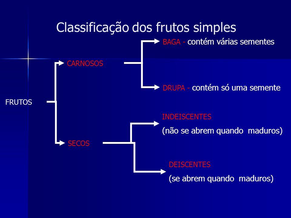 Partes de um fruto: epicarpo (1), endocarpo (2) e mesocarpo (3) 1 2 3