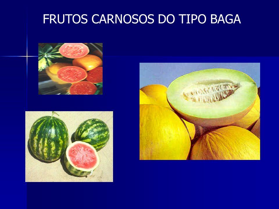 Classificação dos frutos simples FRUTOS CARNOSOS BAGA - contém várias sementes DRUPA - contém só uma semente SECOS INDEISCENTES (não se abrem quando m