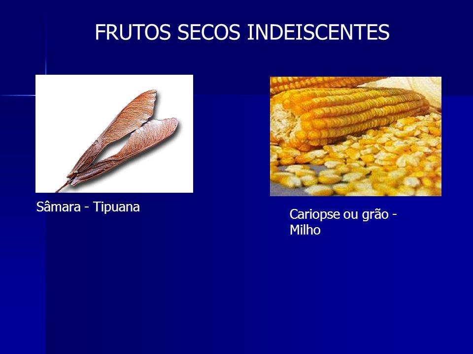 FRUTOS CARNOSOS DO TIPO DRUPA