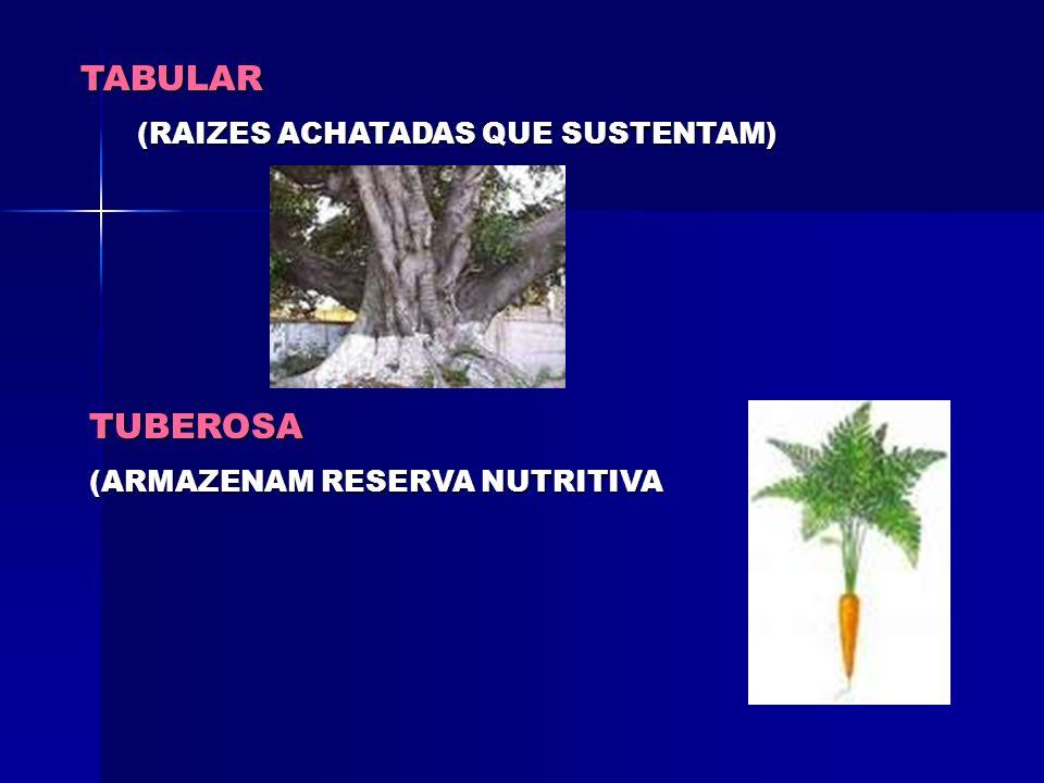 Tipos de Raízes Subterrâneas ou Terrestres Raízes que se fixam no solo e se desenvolvem TIPOS AXIAL OU PIVOTANTE (COM EIXO CENTRAL) FASCICULADA (SEM E