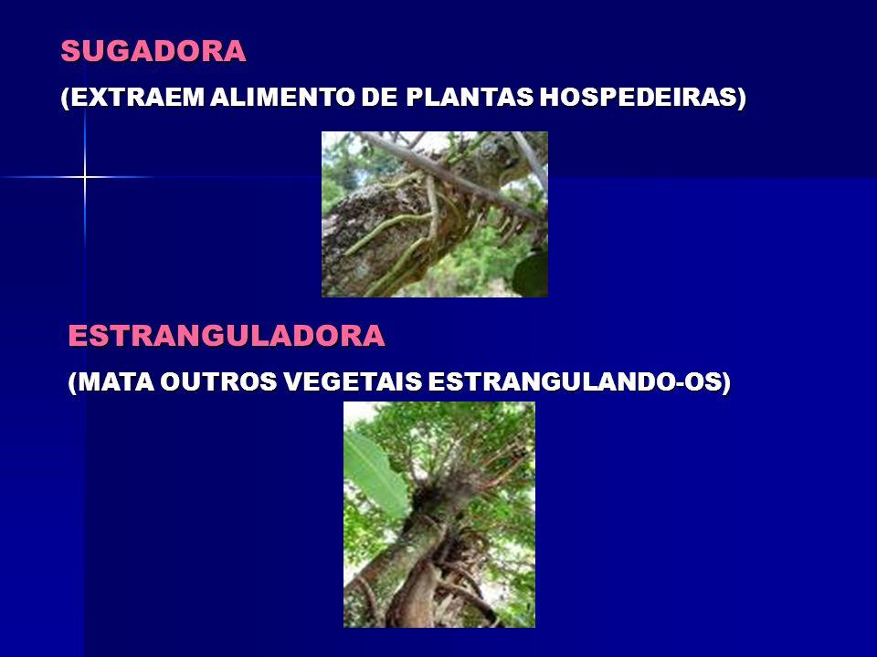 Obs: Tipo especial de raiz subterrânea, podendo ser do tipo axial ou fasciculada: Tuberosas. Este tipo de raiz, além de realizar as funções tradiciona