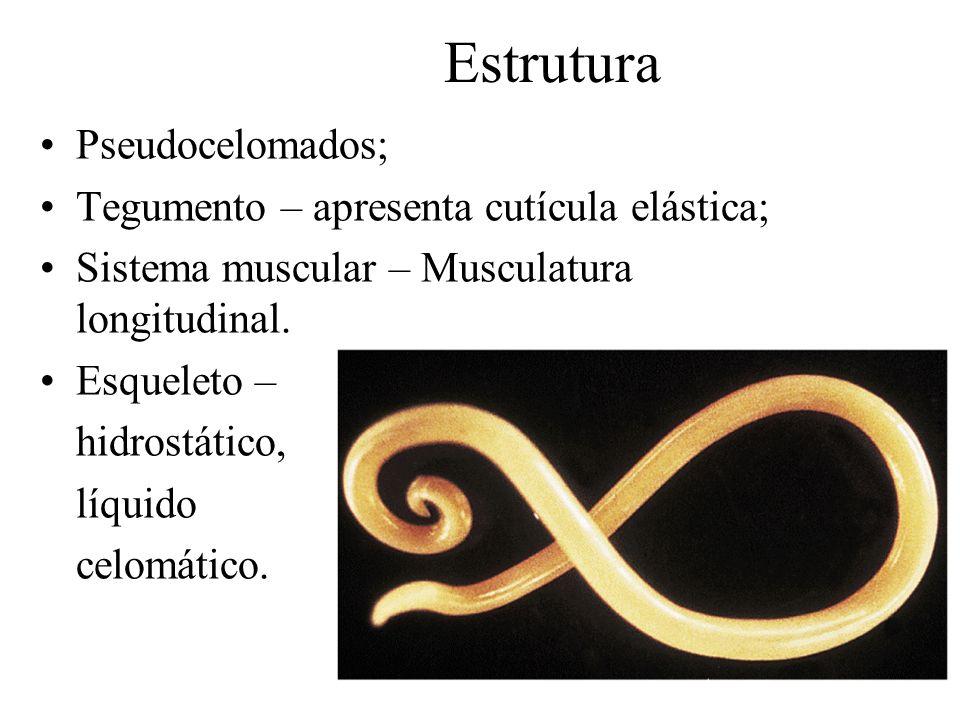 Estrutura Pseudocelomados; Tegumento – apresenta cutícula elástica; Sistema muscular – Musculatura longitudinal.