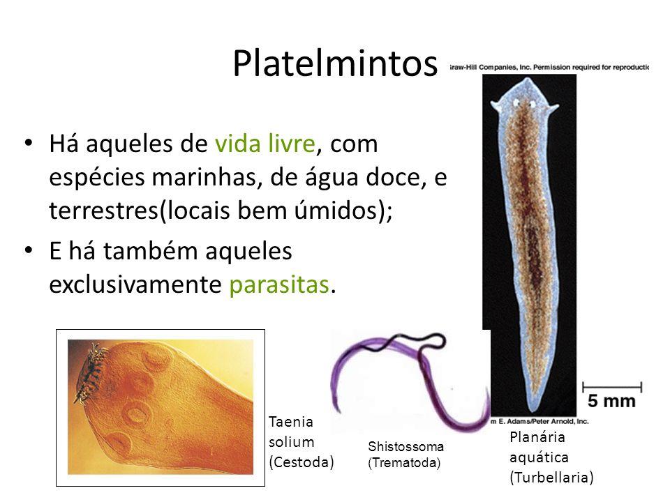 Platelmintos Há aqueles de vida livre, com espécies marinhas, de água doce, e terrestres(locais bem úmidos); E há também aqueles exclusivamente parasitas.