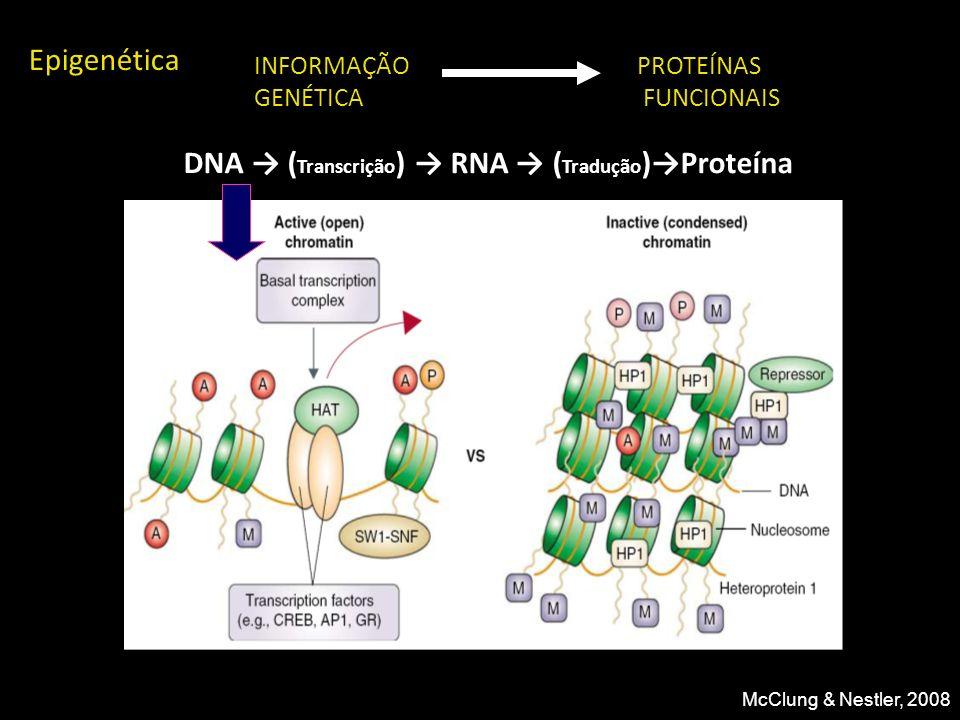 INFORMAÇÃO GENÉTICA PROTEÍNAS FUNCIONAIS DNA ( Transcrição ) RNA ( Tradução )Proteína Epigenética McClung & Nestler, 2008