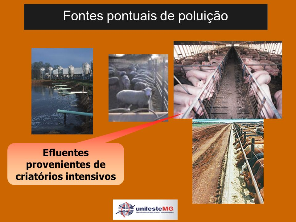 Fontes pontuais de poluição Efluentes provenientes de criatórios intensivos