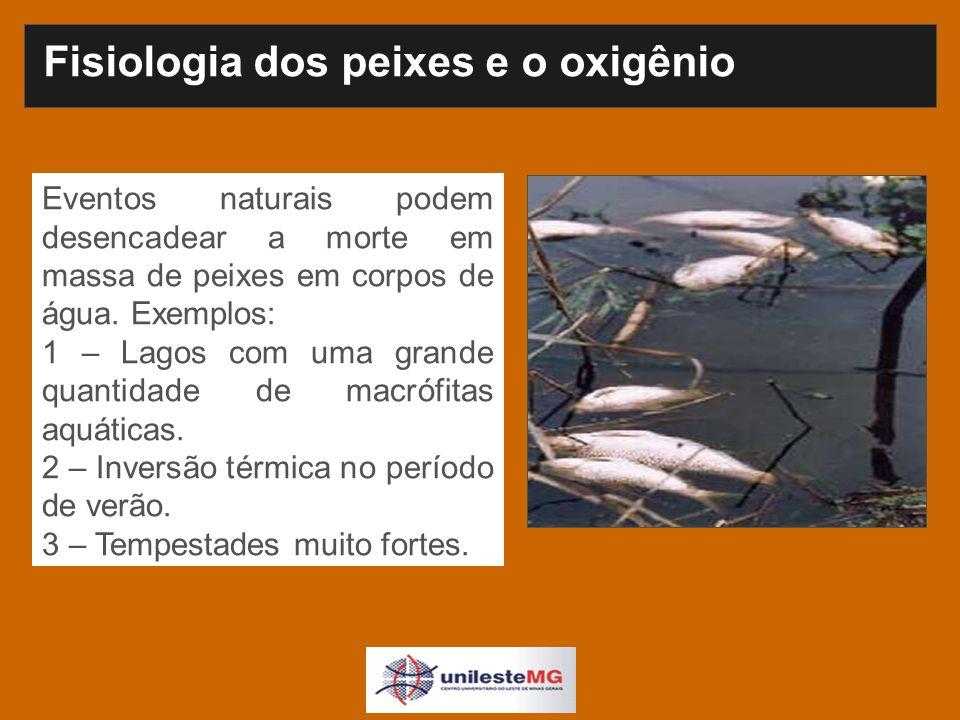 Eventos naturais podem desencadear a morte em massa de peixes em corpos de água.