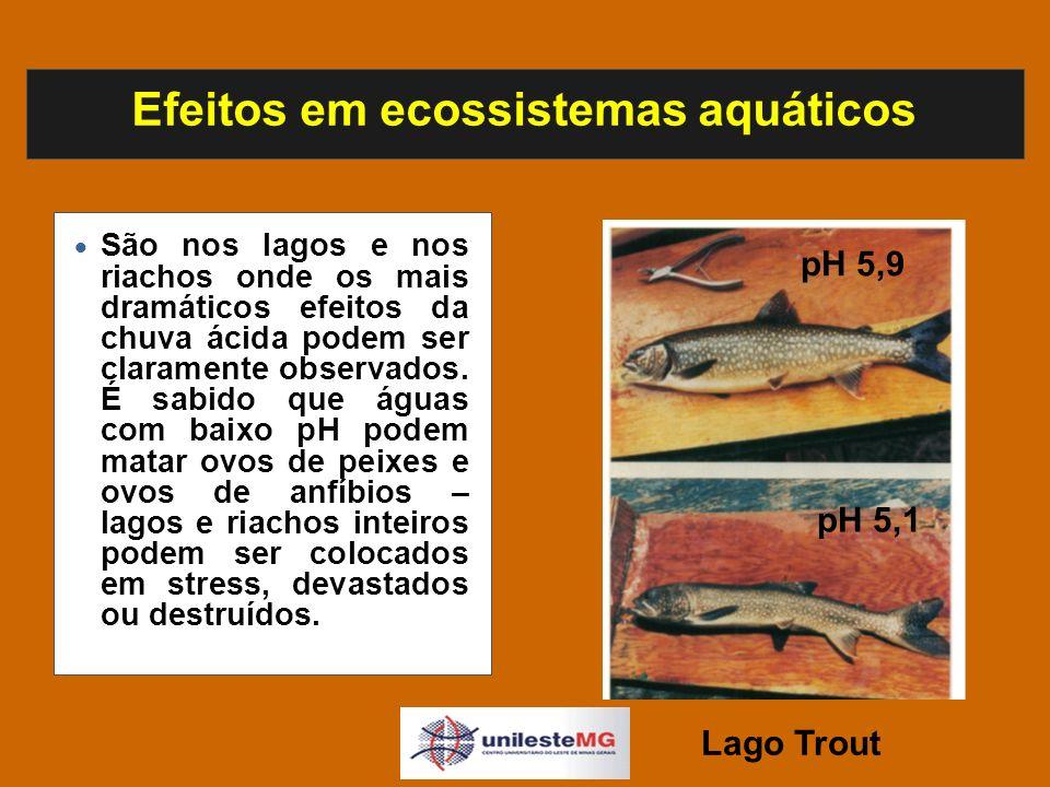 Efeitos em ecossistemas aquáticos São nos lagos e nos riachos onde os mais dramáticos efeitos da chuva ácida podem ser claramente observados.