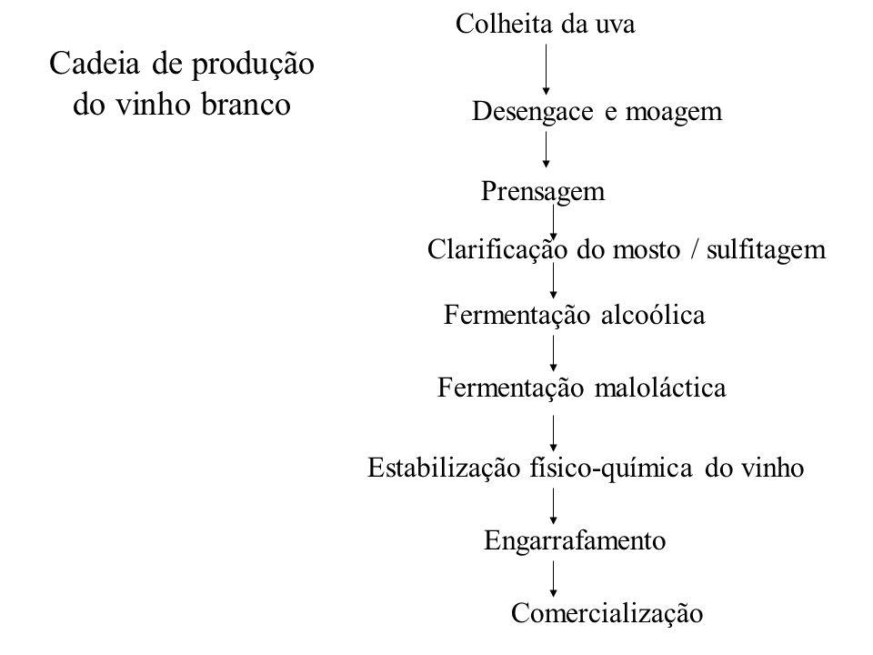 Colheita da uva Desengace e moagem Prensagem Clarificação do mosto / sulfitagem Fermentação alcoólica Fermentação maloláctica Estabilização físico-quí