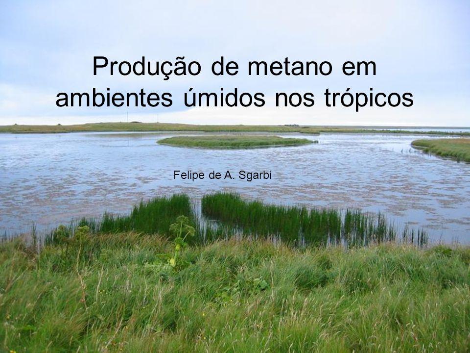 Produção de metano em ambientes úmidos nos trópicos Felipe de A. Sgarbi