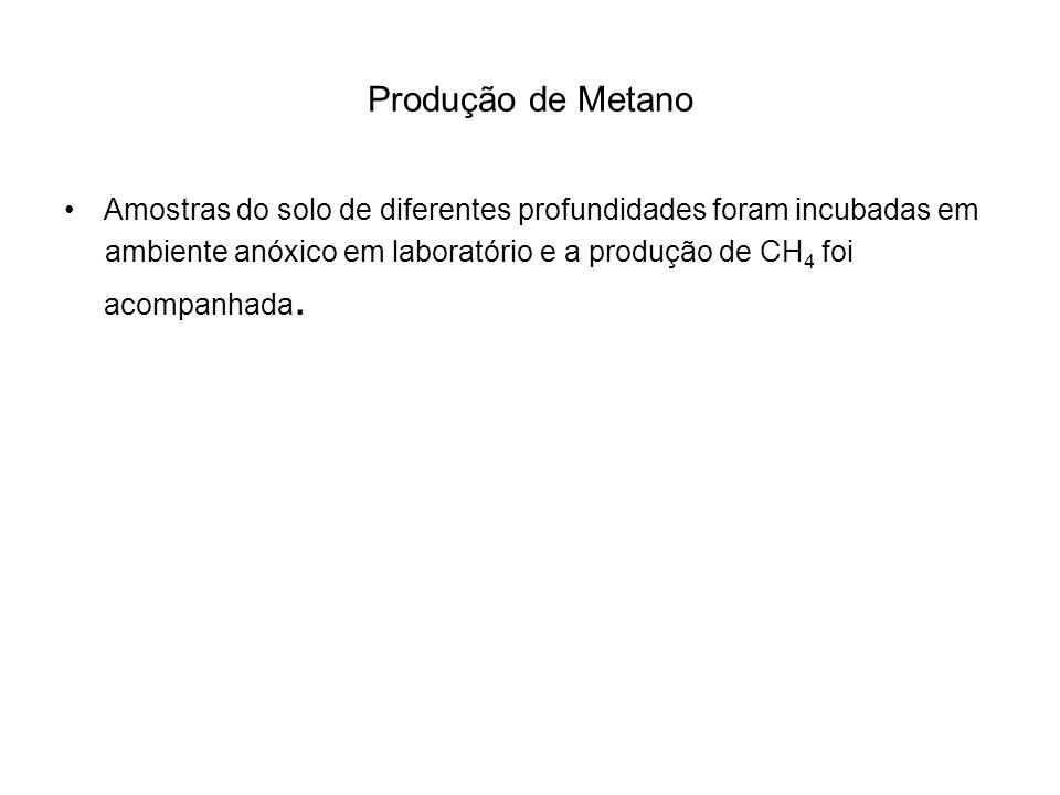 Produção de Metano Amostras do solo de diferentes profundidades foram incubadas em ambiente anóxico em laboratório e a produção de CH 4 foi acompanhad