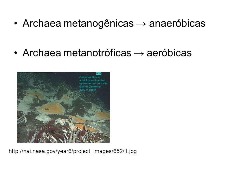 Archaea metanogênicas anaeróbicas Archaea metanotróficas aeróbicas http://nai.nasa.gov/year6/project_images/652/1.jpg