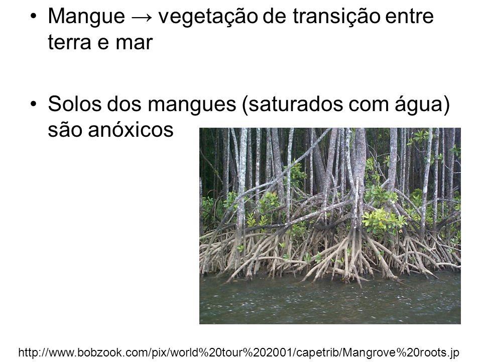 Mangue vegetação de transição entre terra e mar Solos dos mangues (saturados com água) são anóxicos http://www.bobzook.com/pix/world%20tour%202001/cap