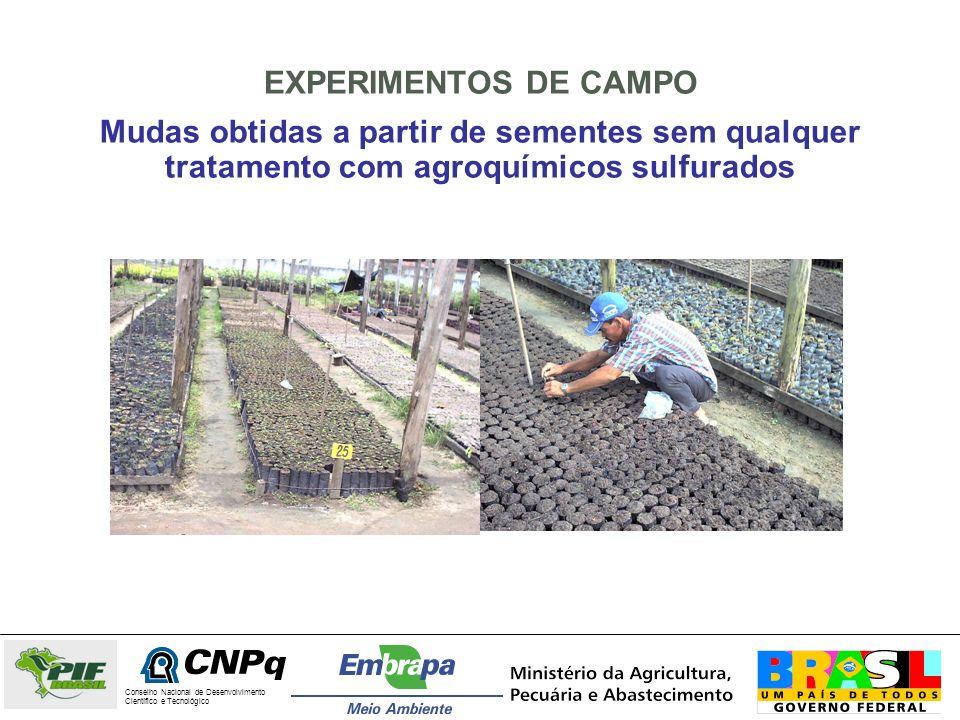 EXPERIMENTOS DE CAMPO Mudas obtidas a partir de sementes sem qualquer tratamento com agroquímicos sulfurados Conselho Nacional de Desenvolvimento Cien