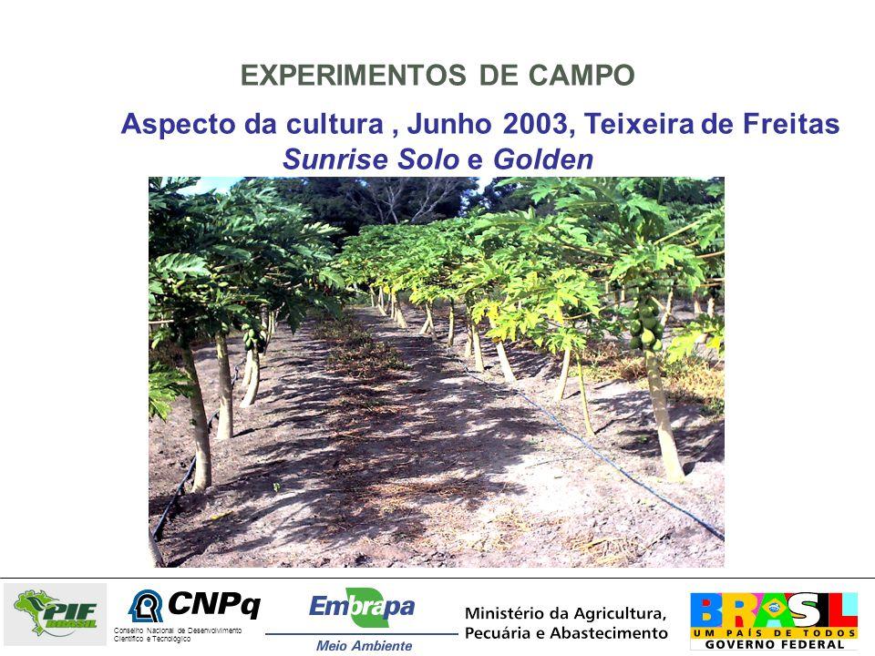 EXPERIMENTOS DE CAMPO Aspecto da cultura, Junho 2003, Teixeira de Freitas Sunrise Solo e Golden Conselho Nacional de Desenvolvimento Científico e Tecn
