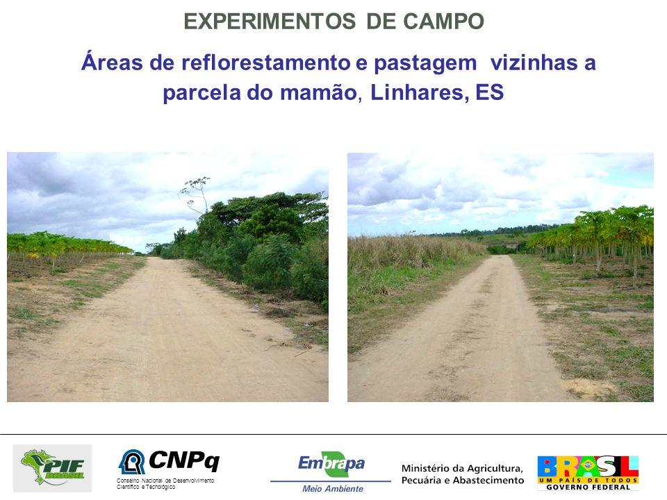 Conselho Nacional de Desenvolvimento Científico e Tecnológico EXPERIMENTOS DE CAMPO Áreas de reflorestamento e pastagem vizinhas a parcela do mamão, L