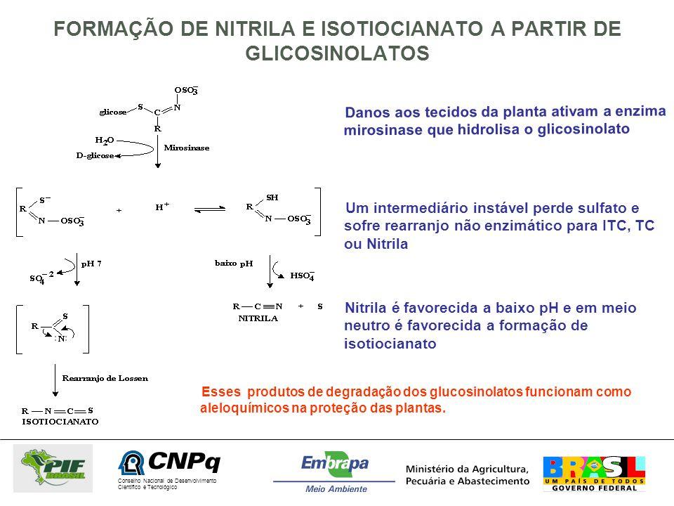 Conselho Nacional de Desenvolvimento Científico e Tecnológico FORMAÇÃO DE NITRILA E ISOTIOCIANATO A PARTIR DE GLICOSINOLATOS Danos aos tecidos da plan