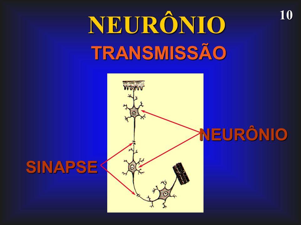 10 NEURÔNIO TRANSMISSÃO SINAPSE NEURÔNIO