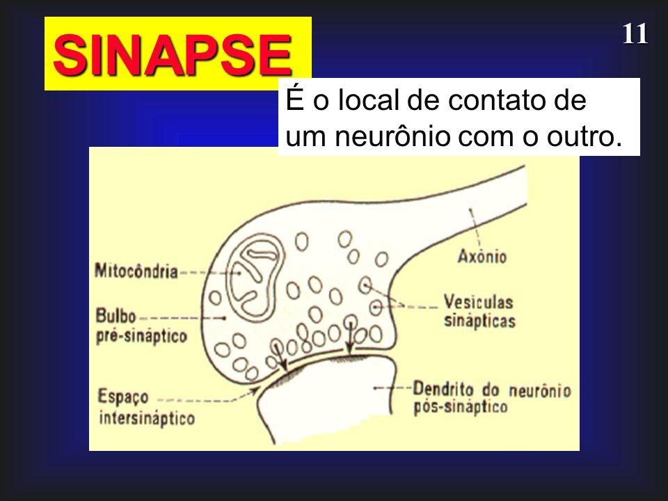 11 SINAPSE É o local de contato de um neurônio com o outro.