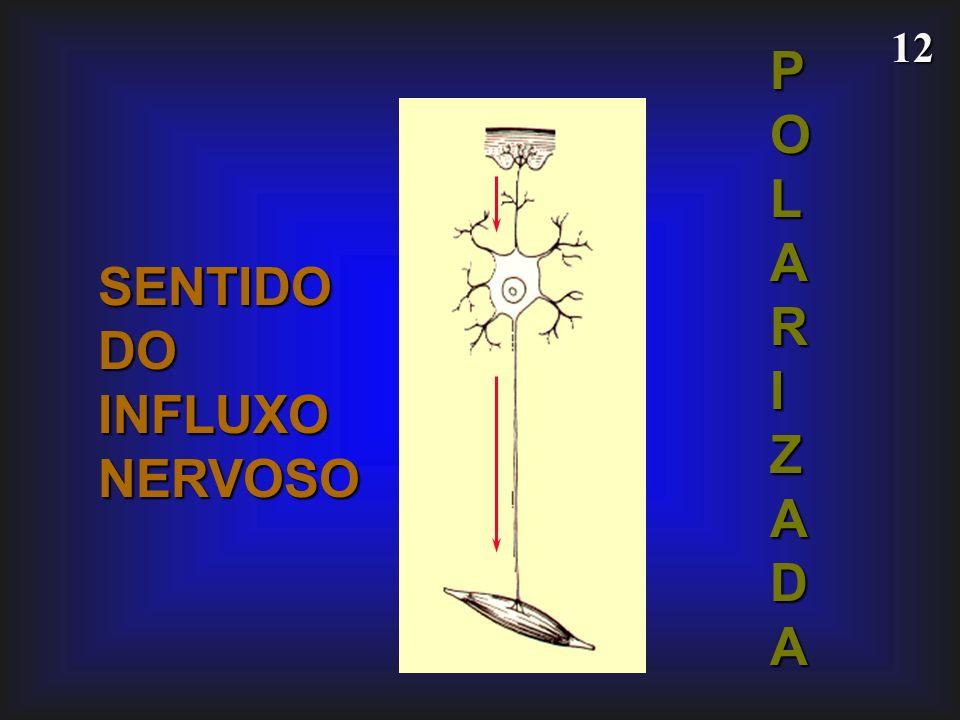 12 SENTIDODOINFLUXONERVOSO POLARIZADA