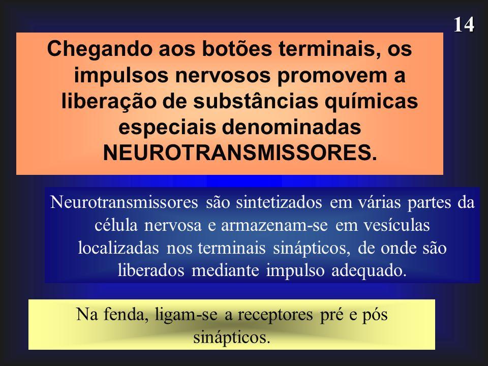 14 Chegando aos botões terminais, os impulsos nervosos promovem a liberação de substâncias químicas especiais denominadas NEUROTRANSMISSORES. Neurotra